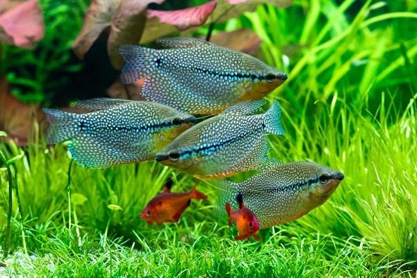 Засаженность аквариума